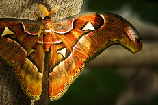 Brown, orange butterfly
